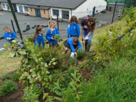 Gardening today at Windmill